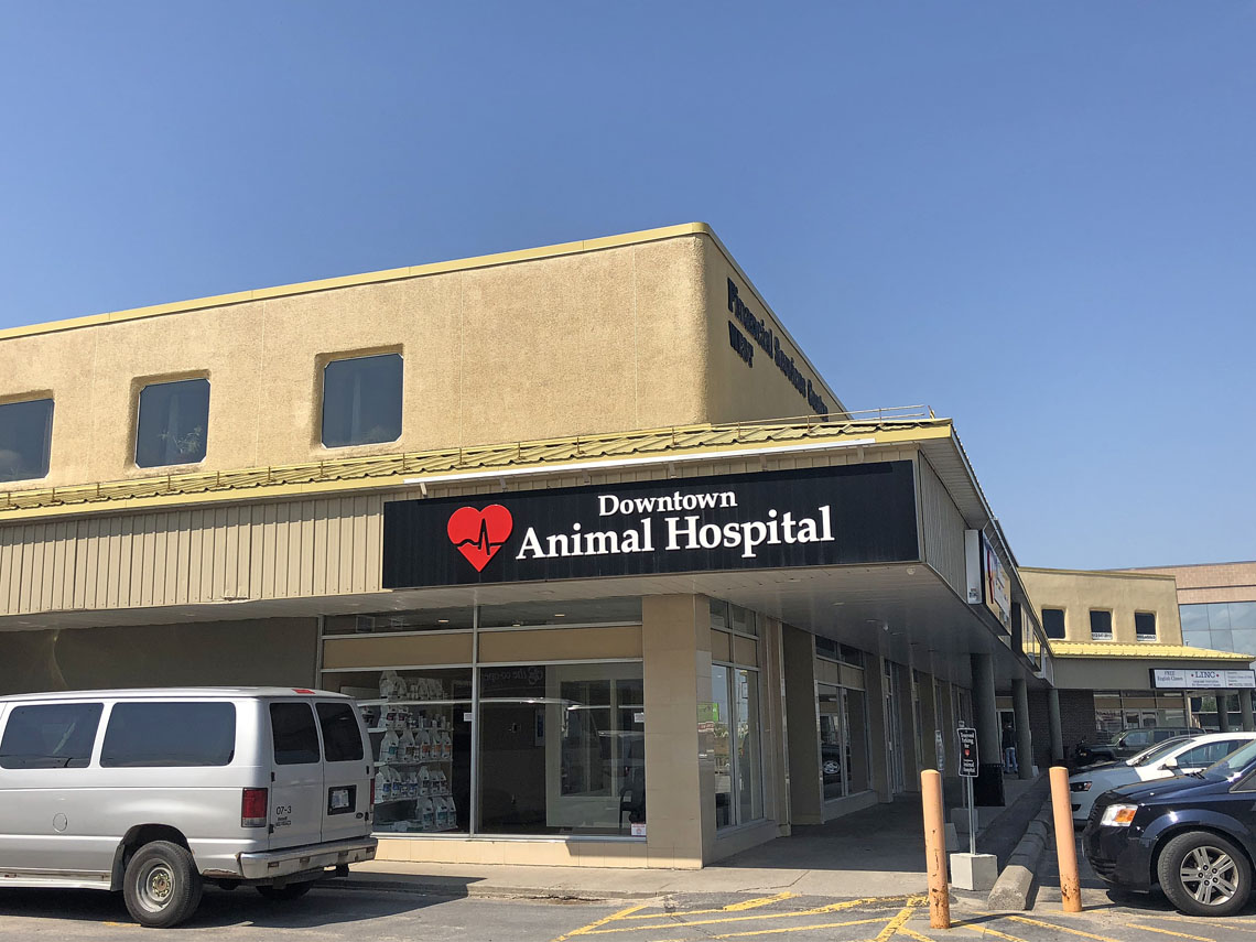 Downtown Animal Hospital Kingston | 2017 Project